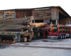 Eiche Holz